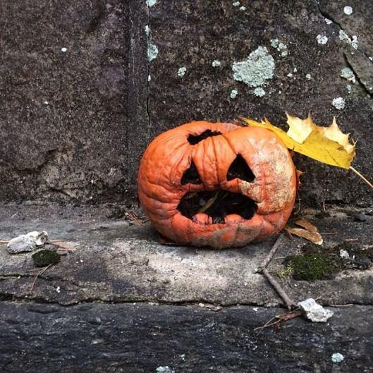 Pumpkin, mid-autumn